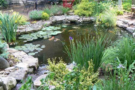 backyard pond in St. Louis, MO   Flowers, gardening & more   Pinter ...  Pond