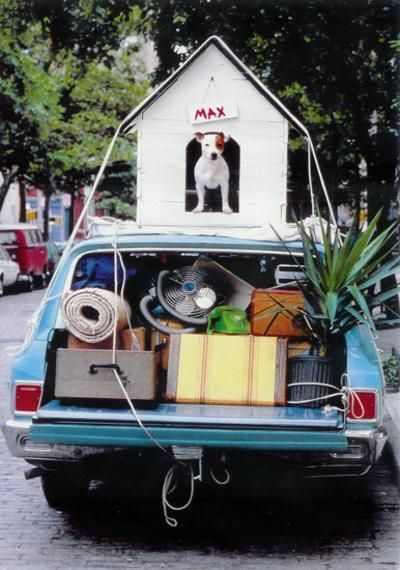 Moving House - Dont forget the dog   ...........click here to find out more     http://googydog.com