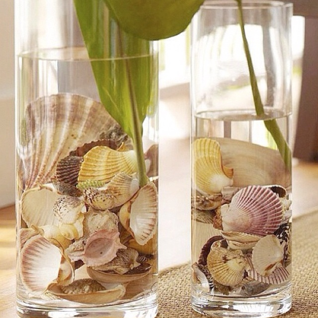 seashell decor home decor pinterest