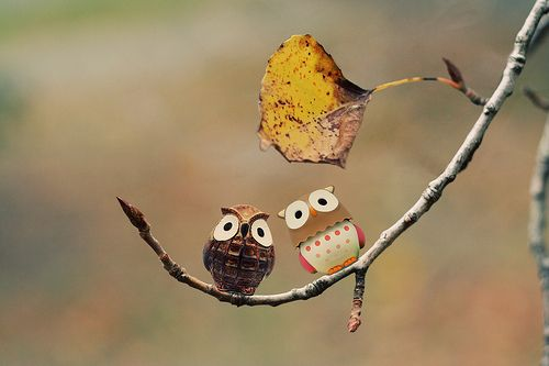 #owls #trees