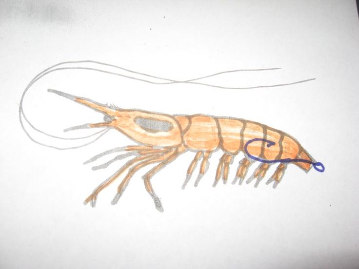 Hook up live shrimp