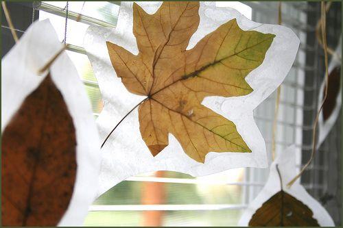 wax paper leaves