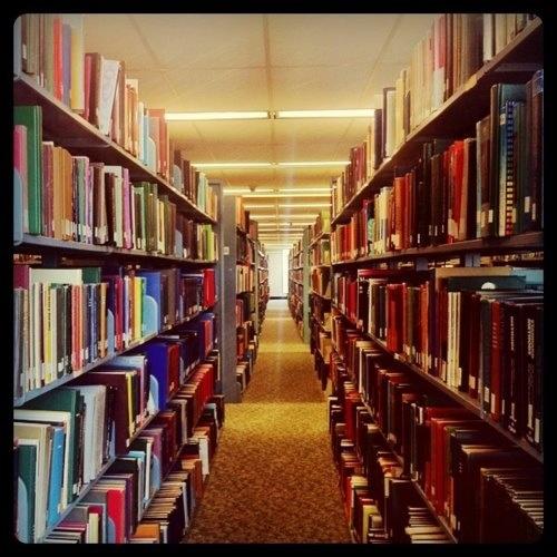 university of florida essay