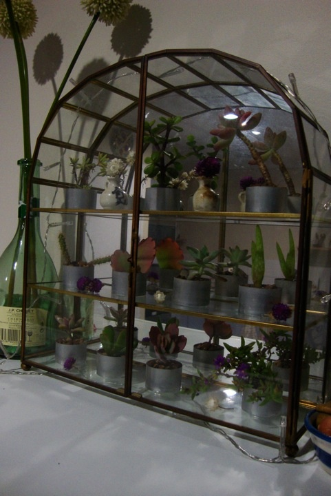 Mini indoor greenhouse flowers plants arrangements for How to make a small indoor greenhouse