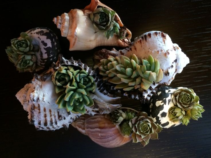 succulent in seashell party favors