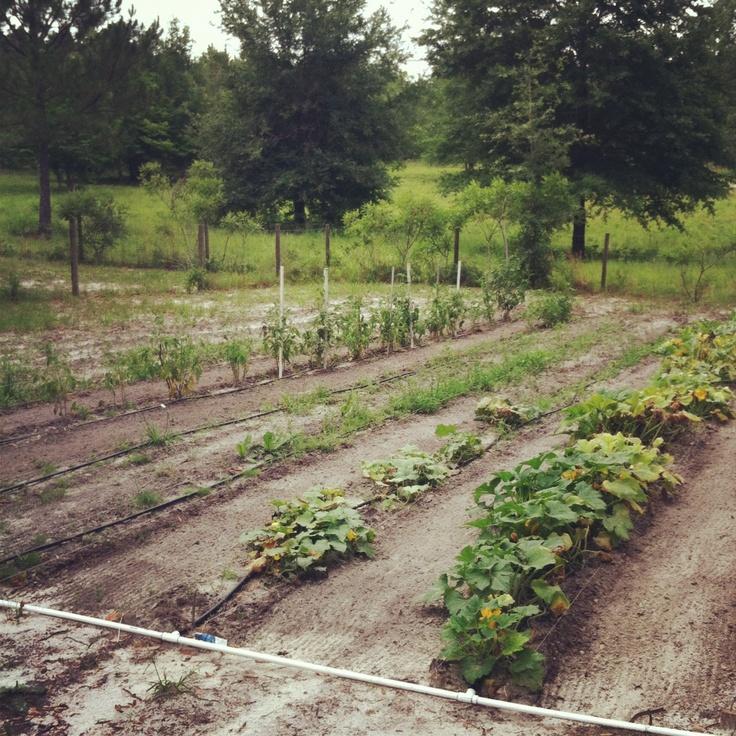 Pin by Sabrina Maness on Gardening Pinterest