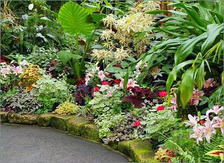Tropical flower garden Garden Pinterest
