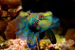 Pin by Tropical Fish Hobbyist Magazine on Breeding Fish Pinterest