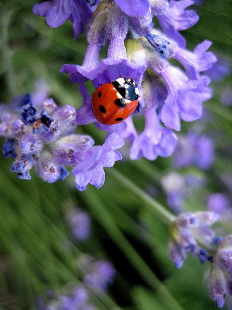lady bugs bees flowers -#main
