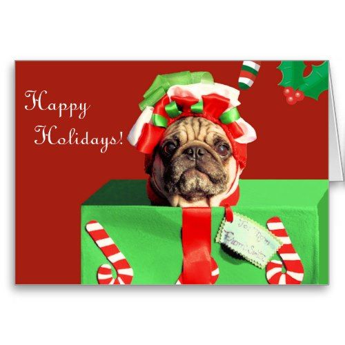 Bighorn in addition Goose Christmas Card furthermore 5063329 besides Shih Tzu Christmas Wallpaper in addition Happy Birthday Marilyn Monroe. on animal greeting cards dogs