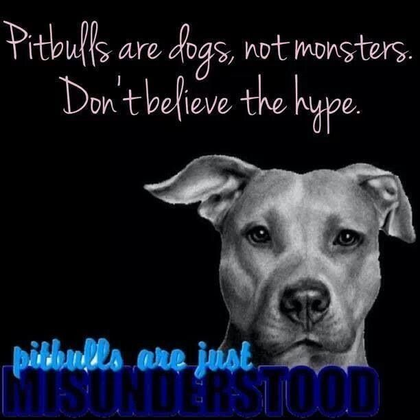 Don t believe the hype support for pitties