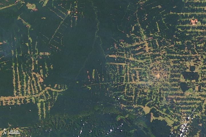 Essay about afforestation and deforestation