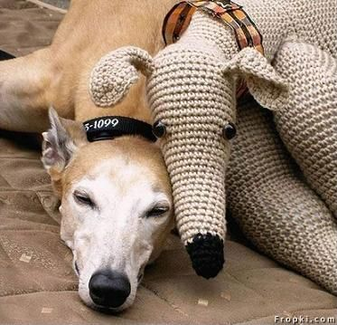 Galgo, Very sweet!