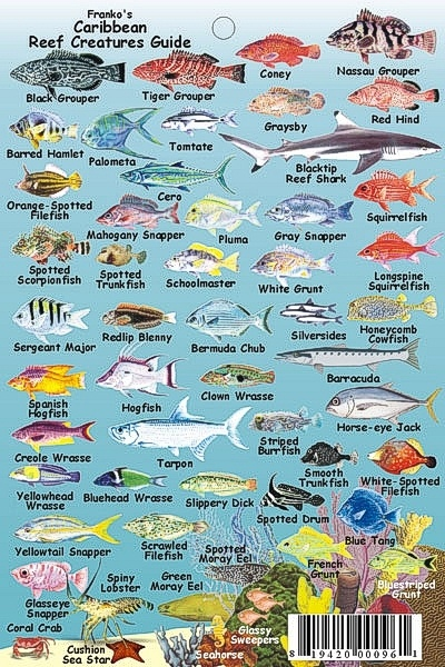 Caribbean reef chart under the sea pinterest for Caribbean reef fish