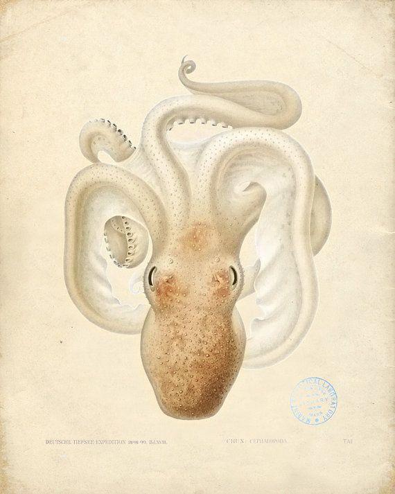 Vintage Octopus Art Print Natural History Sea Life Wall Decor Print 8x10