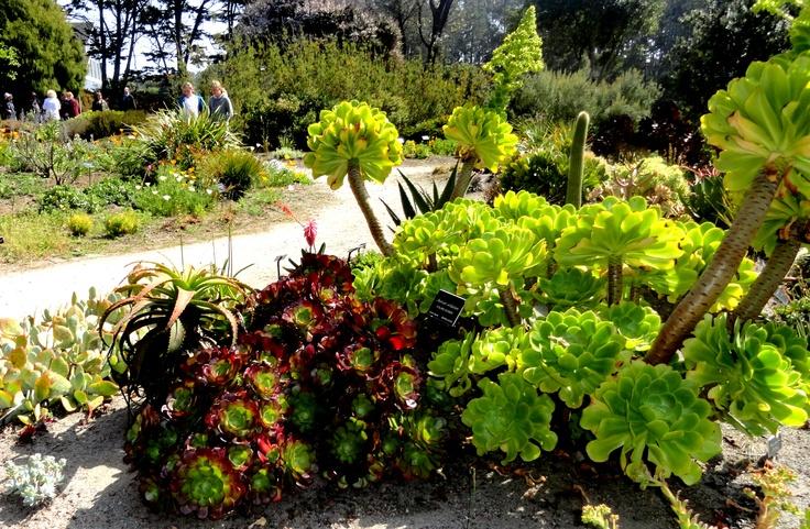 Fort Bragg Botanical Gardens Panoramio Photo Of Botanical Gardens Fort Bragg Brilliant