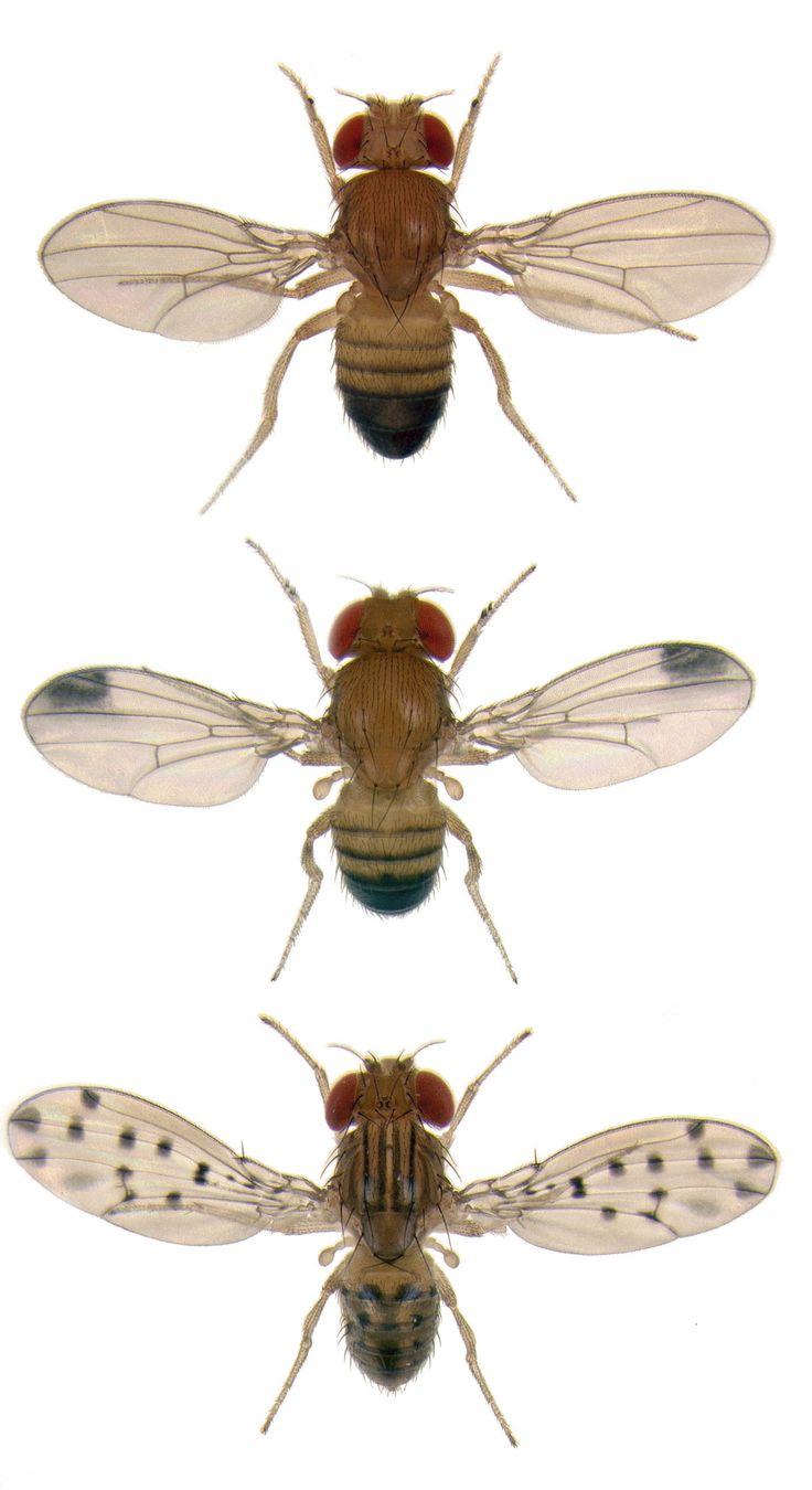 fruit flies. by Bryce Richter