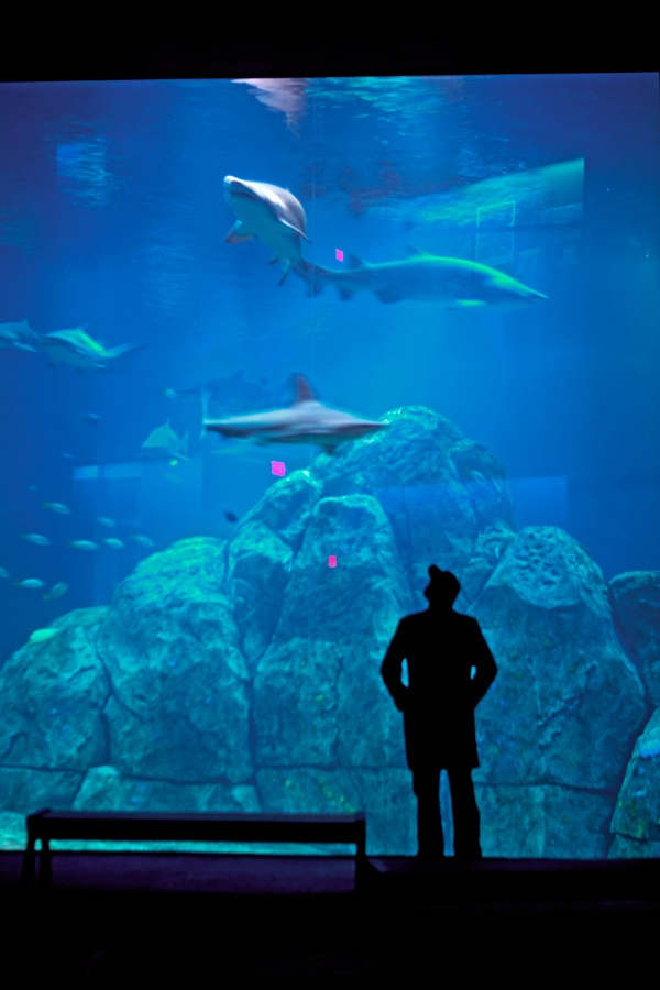 camden aquarium it 39 s a jersey thing pinterest