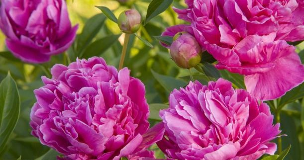 Caring for Flowers Native to Indiana | Home & Garden Ideas