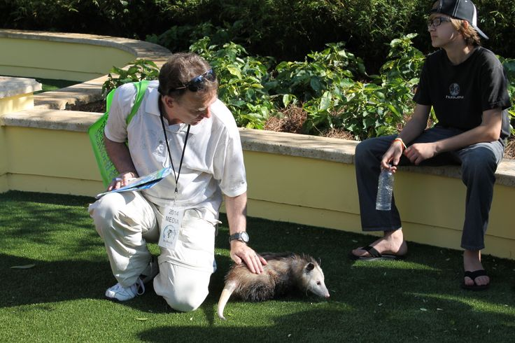 Possum at SeaWorld