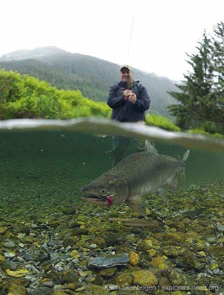 """Cook It Frozen"""" Seared Alaskan Salmon Recipe — Dishmaps"""