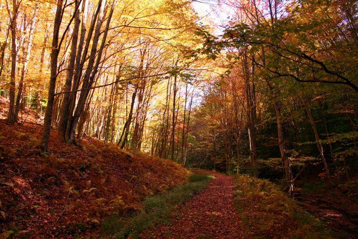 Fall = hoodies, football, hot chocolate, bon fires, hay rides, the