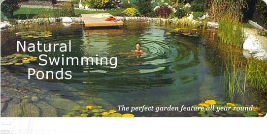 Natural swimming pond landscaping pinterest for Swimming pool koi pond conversion