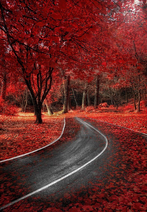 Red Autumn Madrid Spain Beautiful Places Pinterest
