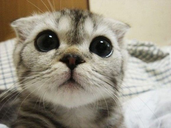 Cutest Kittens Online Today [20 Pictures]