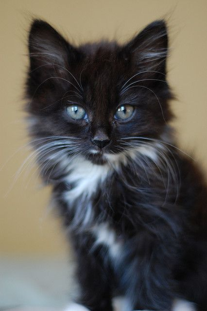 Cute Fluffy Kitten | Lily Pad