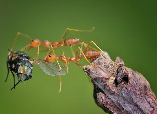 ants macro photos |