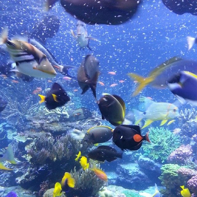 Search Results For Long Island Aquarium And Exhibition