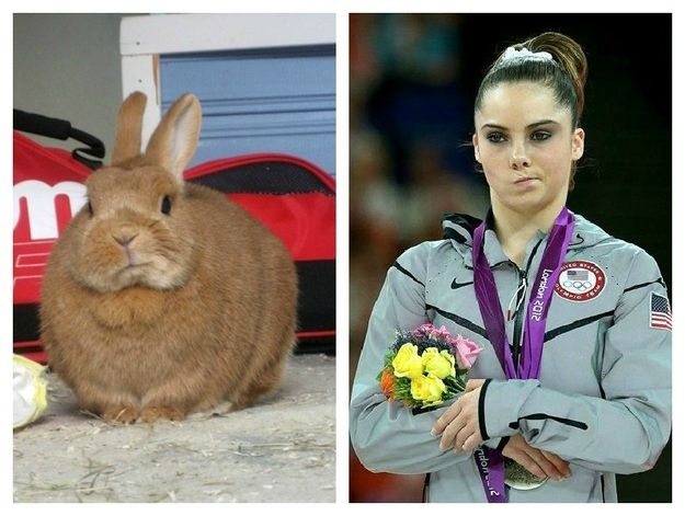 Not Impressed // http://www.buzzfeed.com/rsultan/this-bunnys-not-impressed