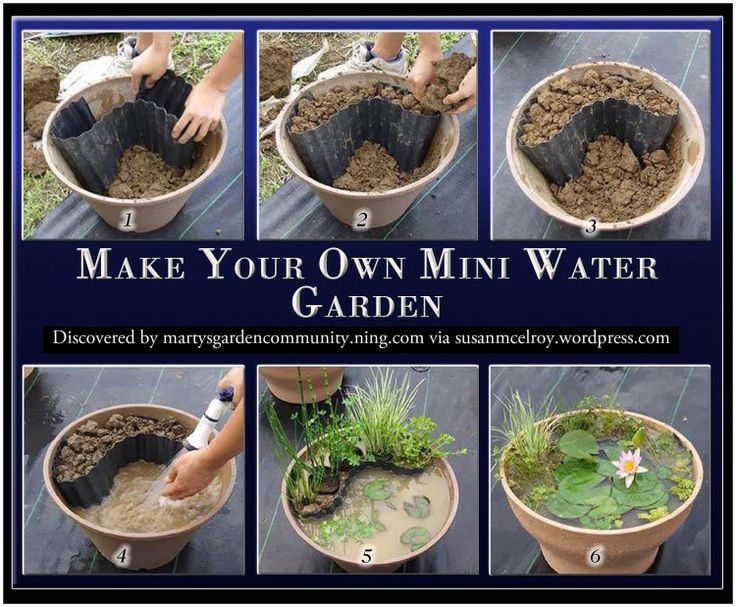 make your own mini water garden best gardening diy ideas