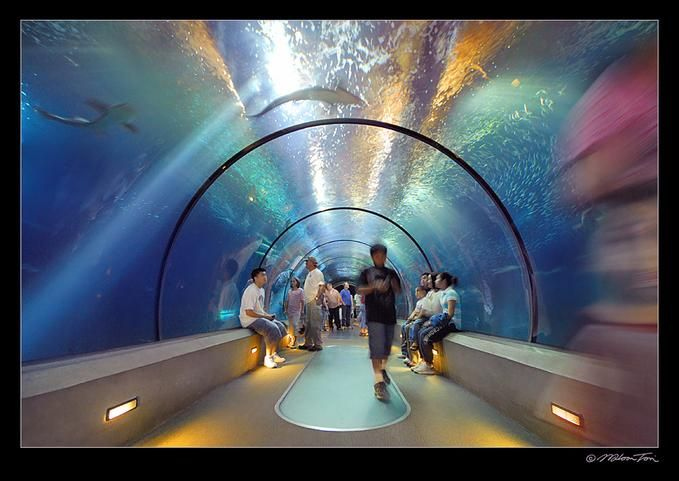 It showcases thousands of animals from all over the world through a variety of exhibits. Expect to see rays, sharks, fish, amphibians, reptiles, and invertebrates.