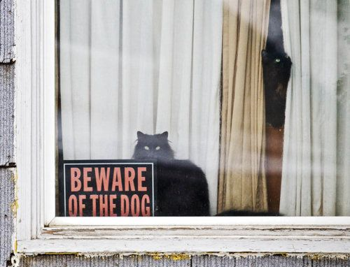 tumblr_lz5mppLTVi1qzou5ko1_500.jpg (beware,dog,window,cats,curtains,sign)