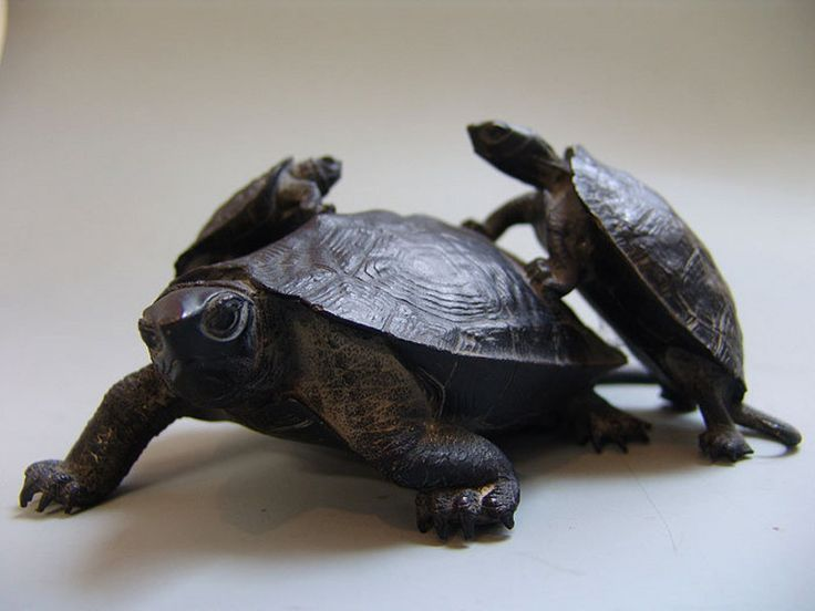how to say turtle in japanese
