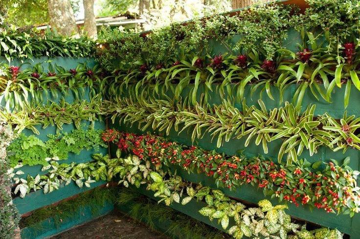 horta jardim vertical:Como Fazer Um Jardim Vertical