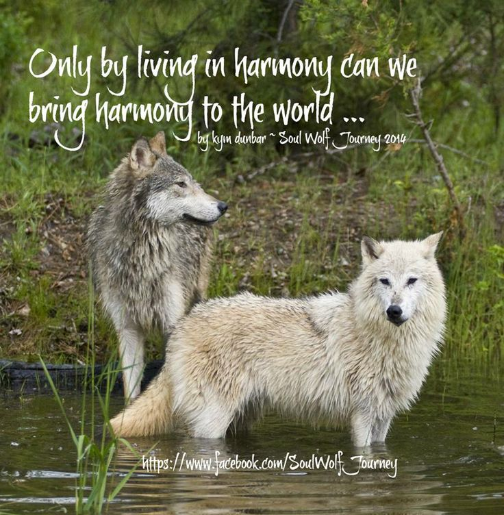 Only By Living in Harmony Can We Bring Harmony to the World--Kym Dunbar