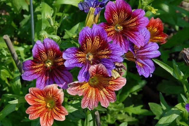 flowers boston