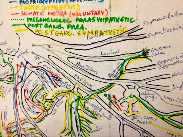 Facial Nerve Map 5