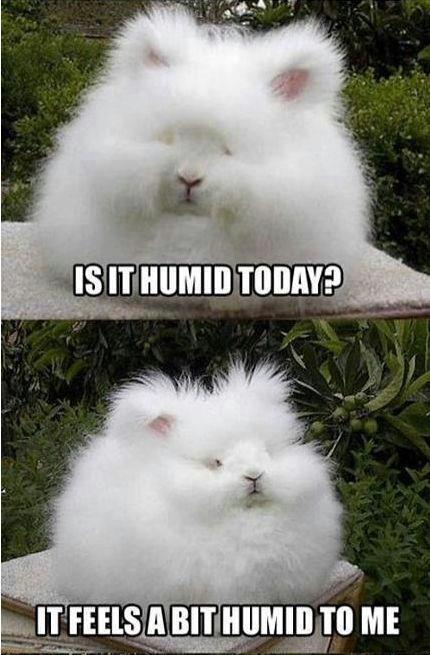 Life with big hair... Humidity Today, Curly Hair Problems, Angora Rabbit, Make Me Laugh, Funny Stuff, Fluffy Bunny, Hair...