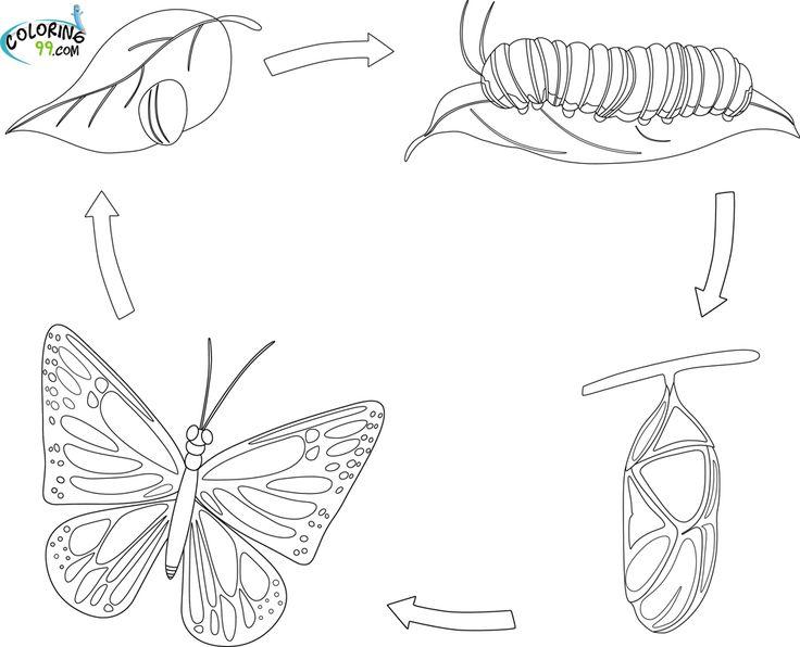 Life cycle of butterfly printable | Kindergarten | Pinterest