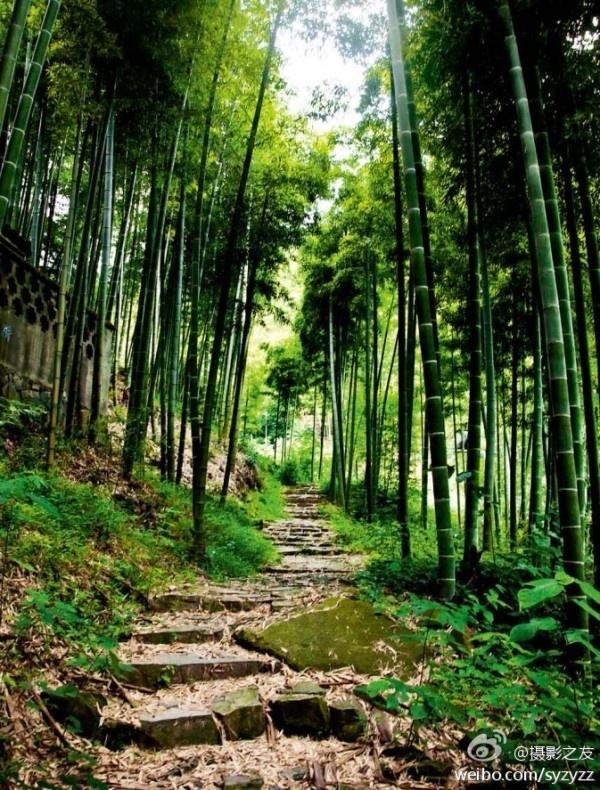 Bamboo Bamboo Outdoors Pinterest