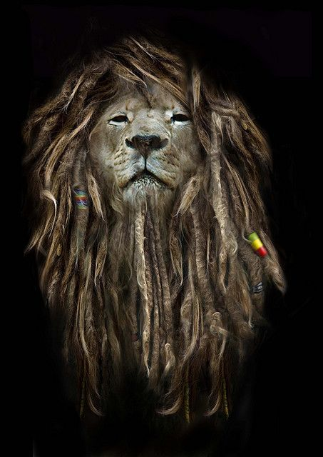 Rasta Lion With Dreads Lion of judah <3 with dreads