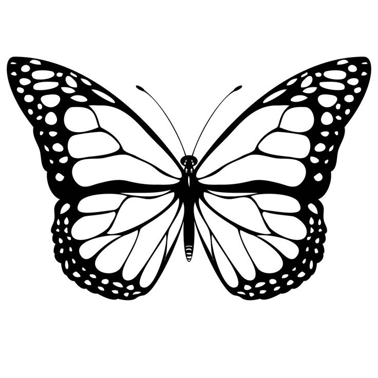 Monarch Butterfly Free Coloring Pages