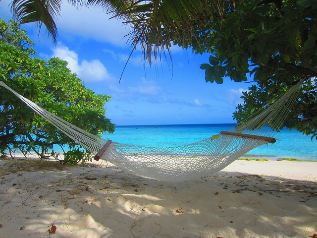 Hammock on the beach | Sunny Beach Days | Pinterest
