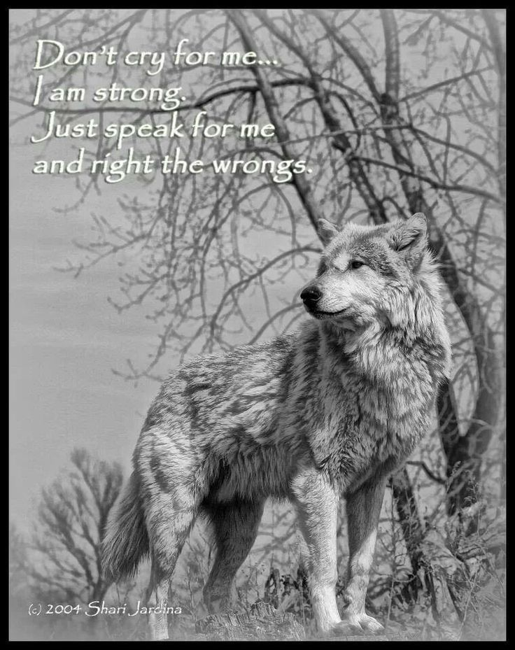 Wolf Quotes About Life. QuotesGram Wolf Quotes About Strength