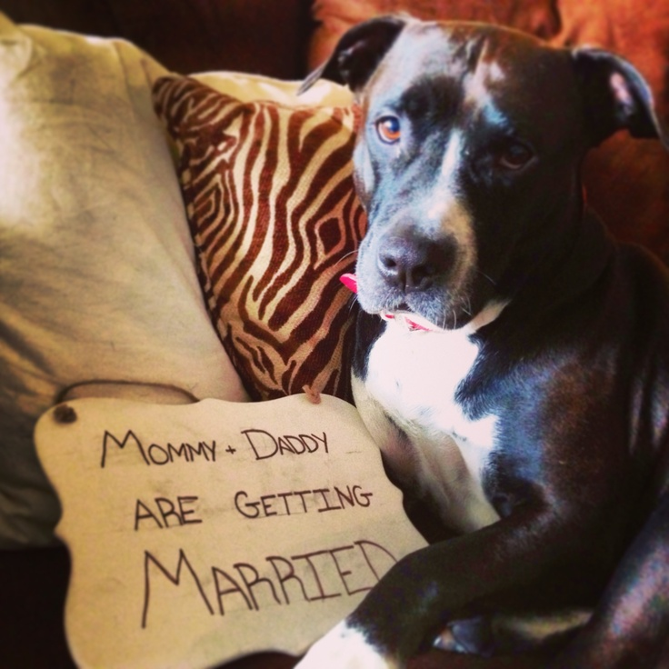 Our baby's so excited we are getting married!   #engagement #pitbull #puppybaby