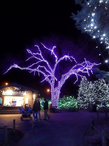 Toledo Zoo, Lights Before Christmas | My Home Town | Pinterest